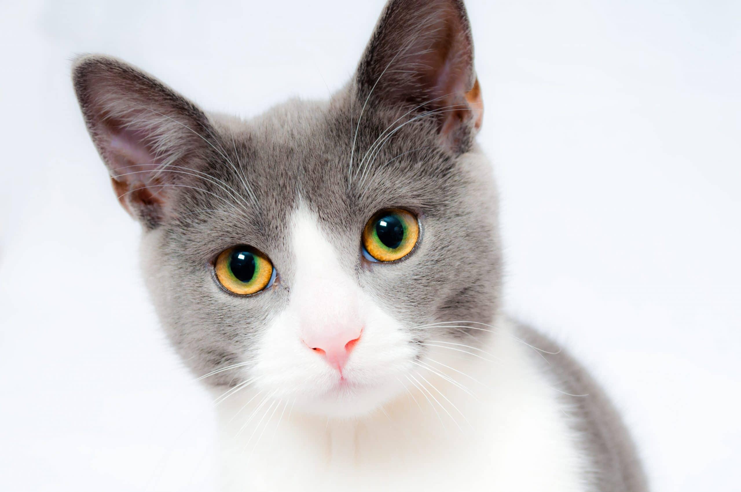 Gato limpio y sano