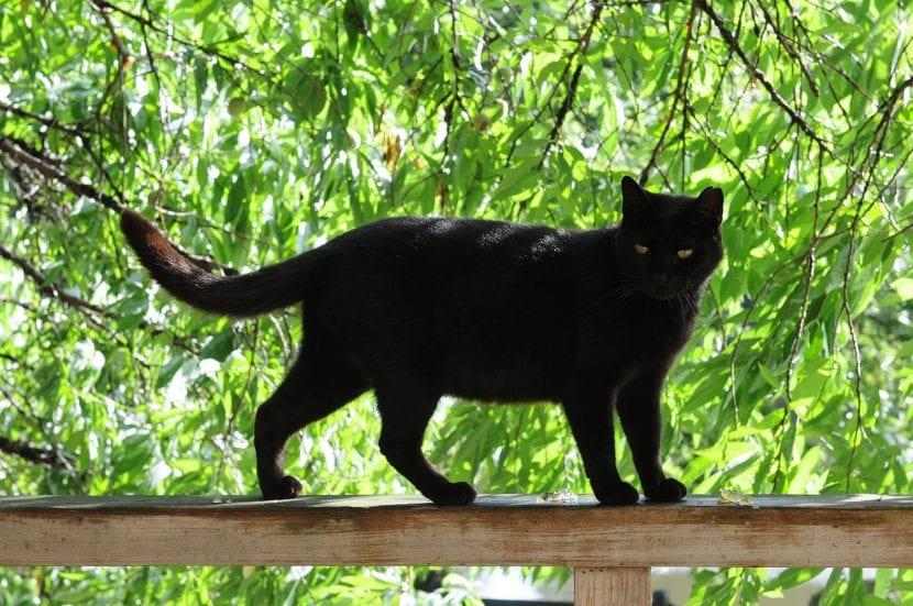 Gato negro sobre un árbol