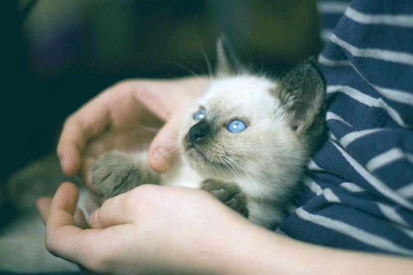Gatito con persona