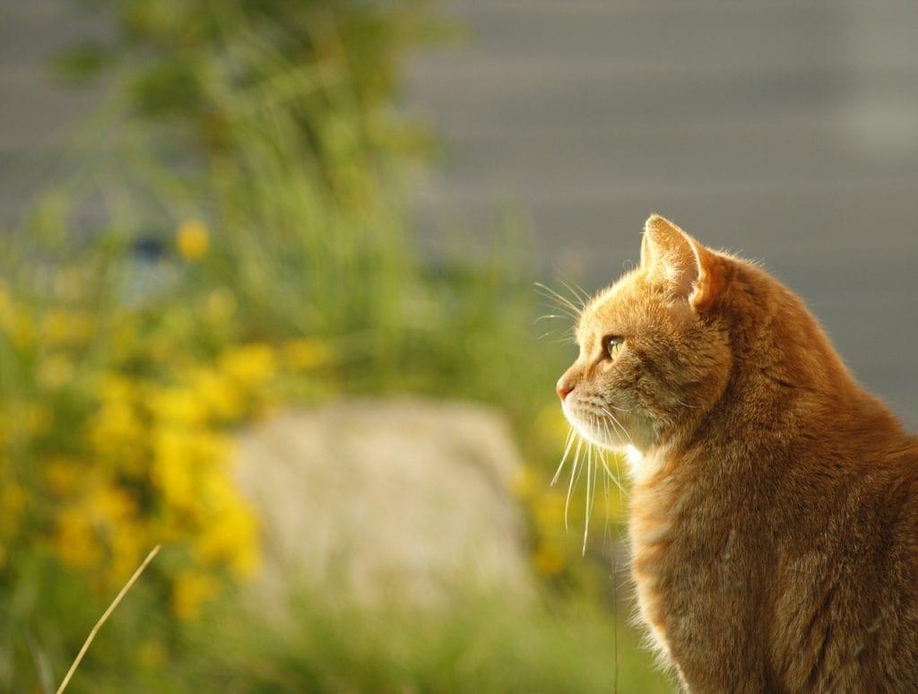 Gato atigrado tomando el sol