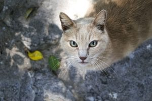 Gato callejero adulto