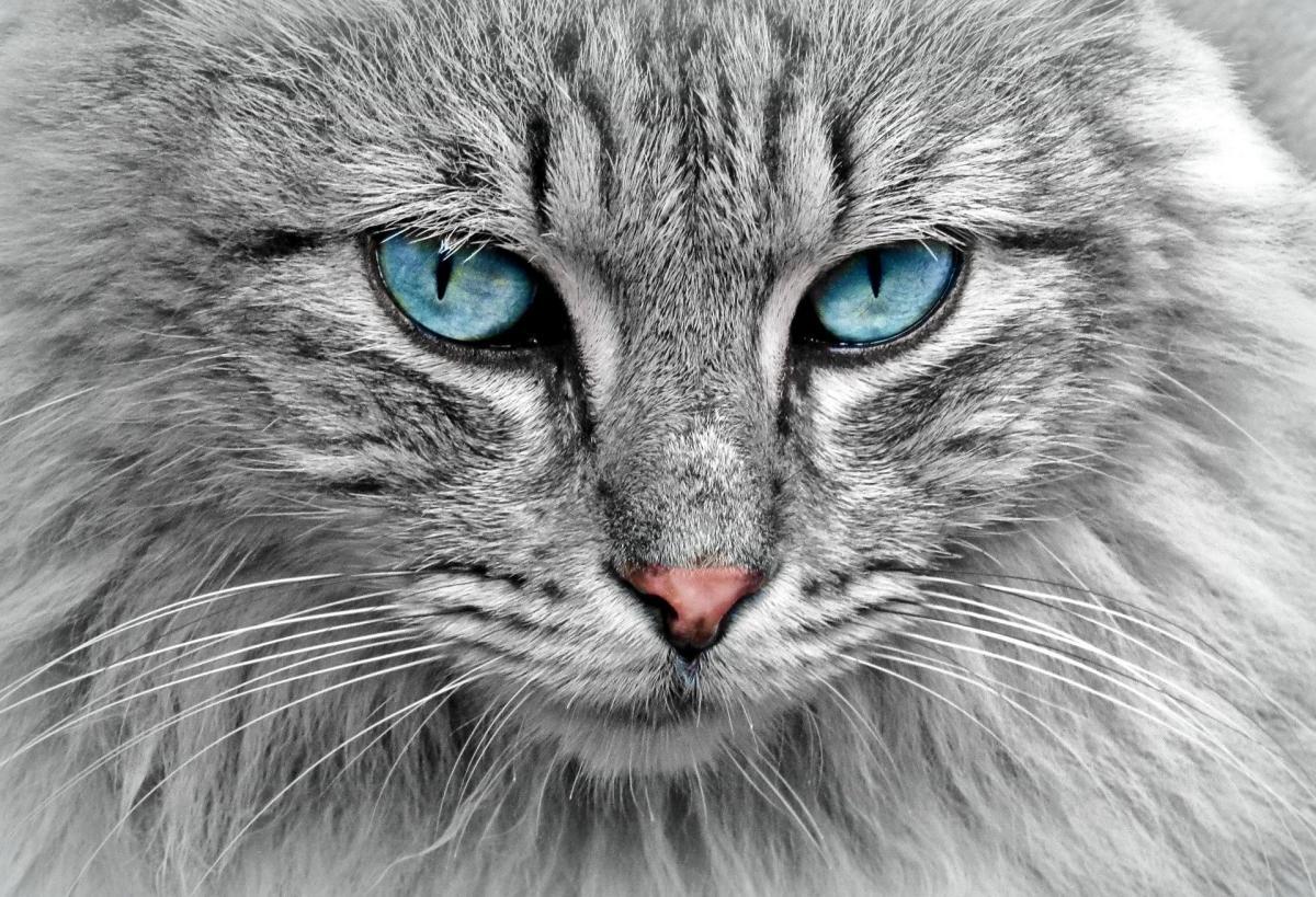 Descubre por qué a tu gato se le caen los bigotes
