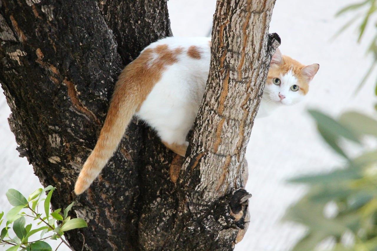 Gato subido a un árbol