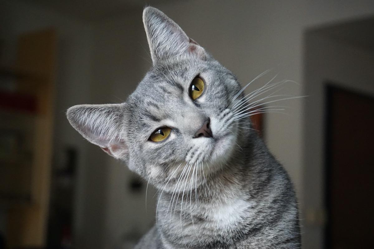 Hay gatos que miran por la ventana