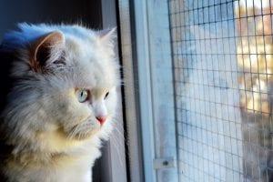 Pon una red para que el gato no pueda caerse desde la ventana