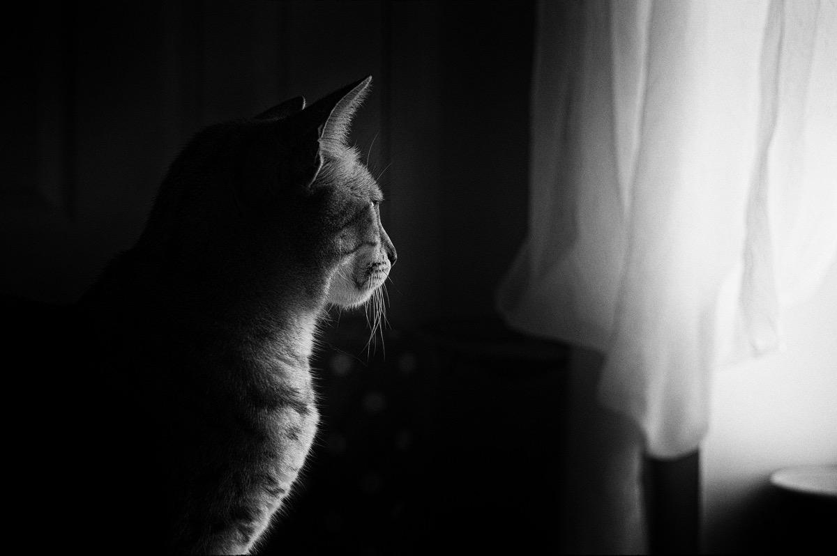 Los gatos mal atendidos quieren salir fuera