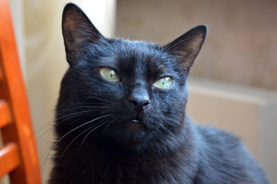 Protege a tu gato de los peligros del hogar