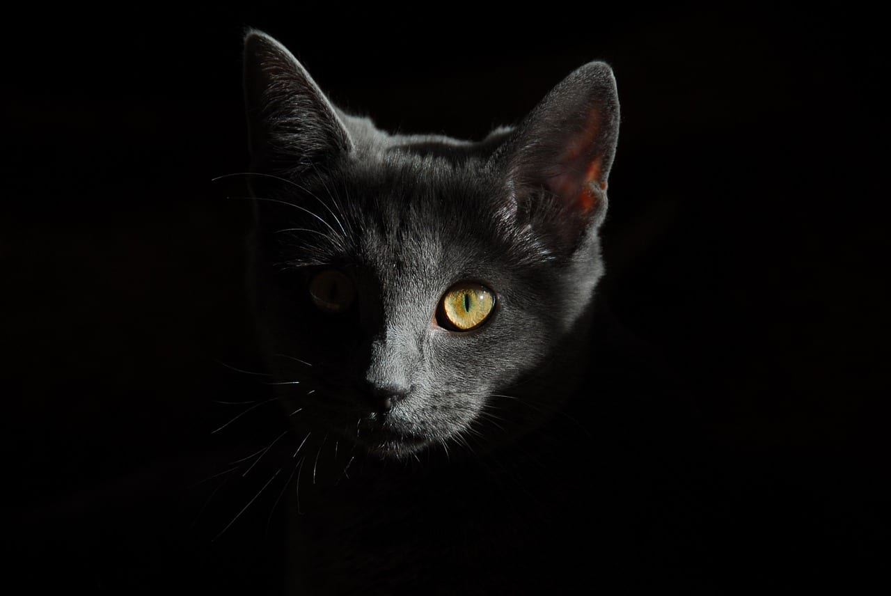 Gato negro escondido