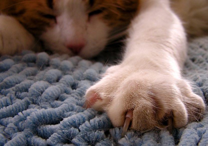 Pata de un gato durmiendo