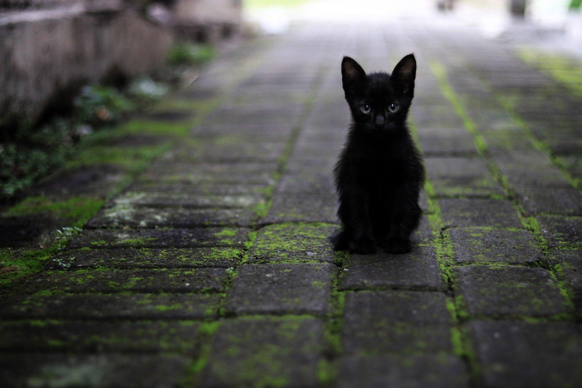 Los gatos asustados pueden huir