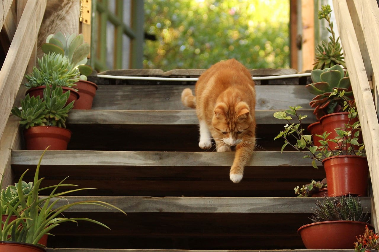 Gato naranja bajando las escaleras