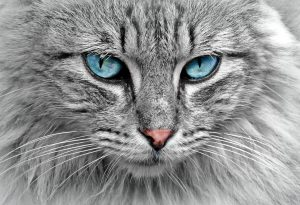 Si tu gato desconfía dale espacio