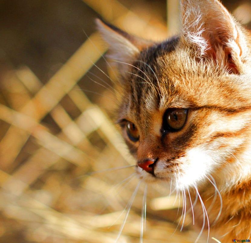 Los gatos se asustan con los ruidos fuertes