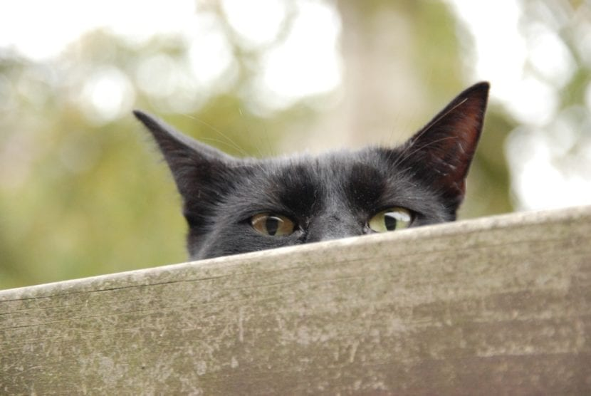 El gato puede asustarse