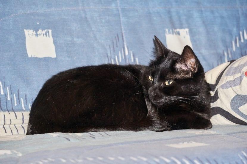 Gato negro tumbado sobre el sillón