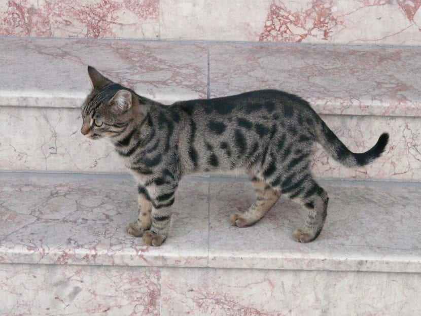 Precioso gato en las escaleras