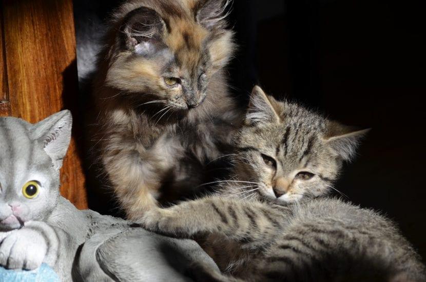 Dos gatitos en una casa