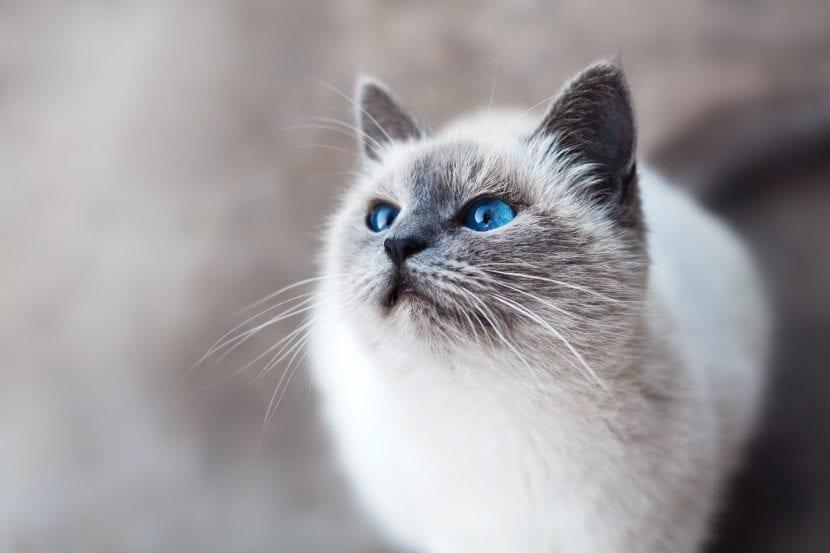 Encantador gato adulto