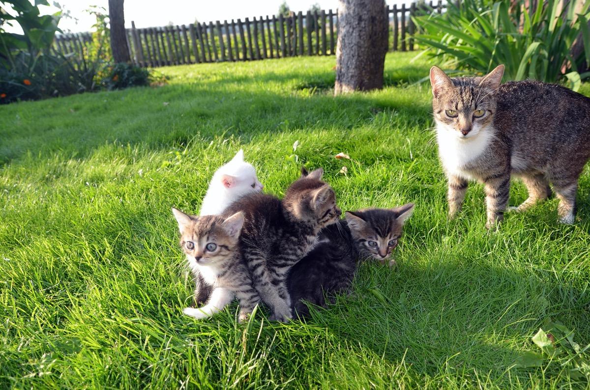 Los gatitos deben alimentarse de leche al principio