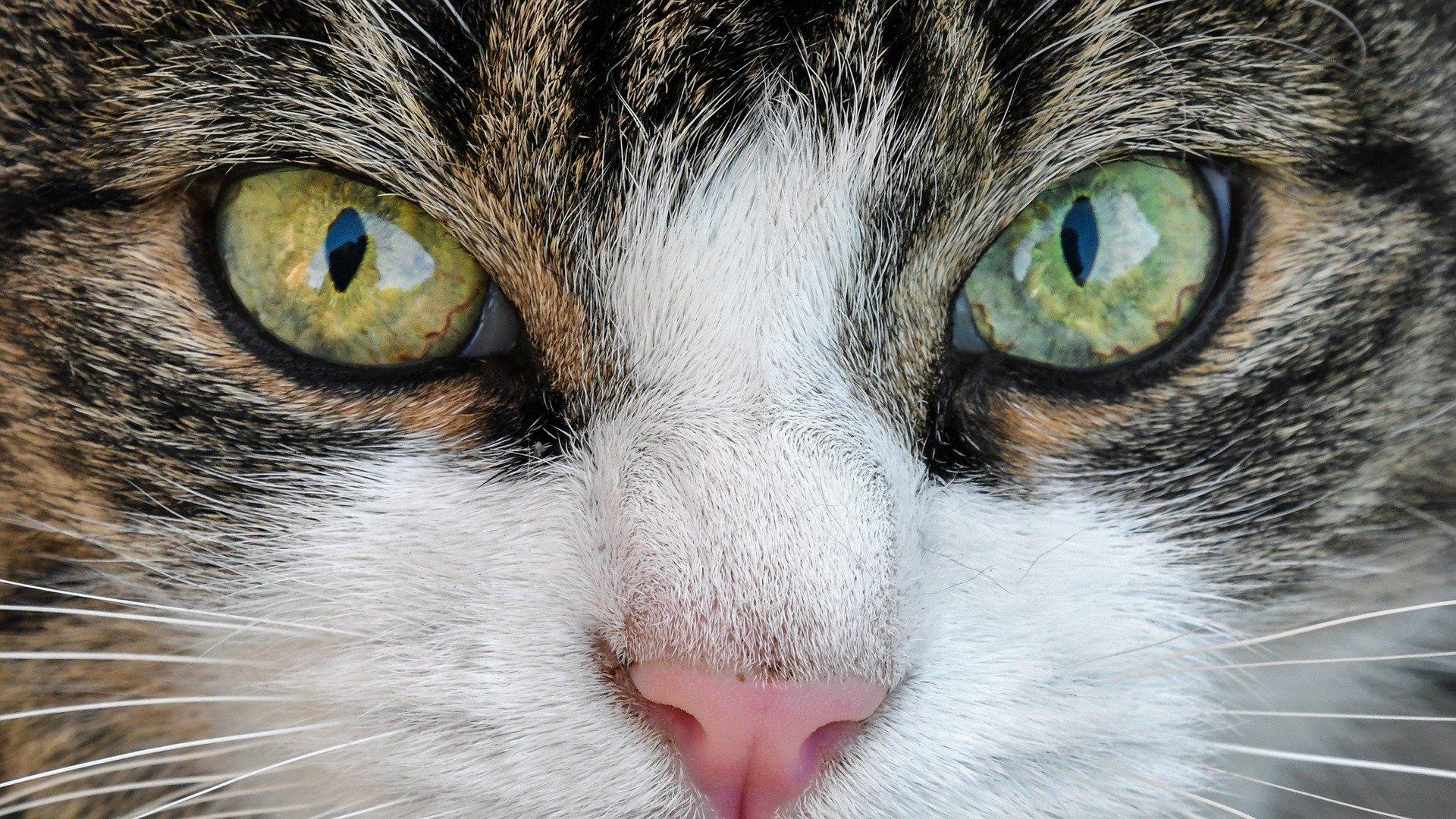 Los gatos pueden ayudarte a dormir mejor
