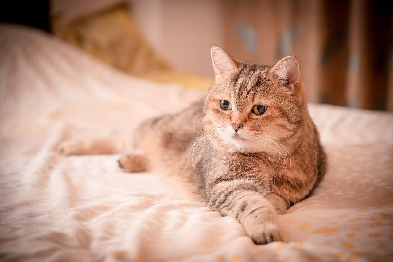 Adorable gato en la cama