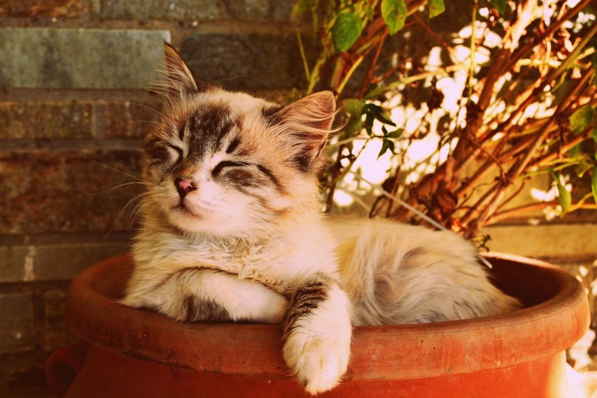 Los gatos necesitan seguir una rutina