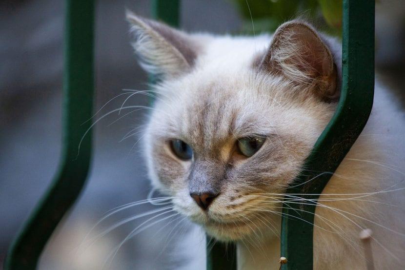Los gatos pueden sufrir daños en la calle