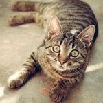 Conoce a tu gato antes de traer a otro