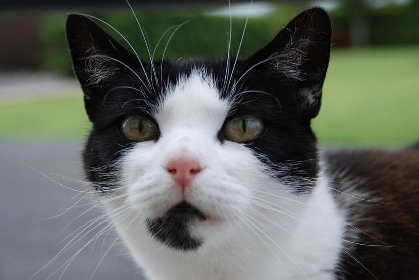 Los gatos que se van pueden regresar