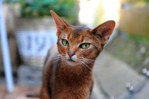 Gato doméstico en el exterior