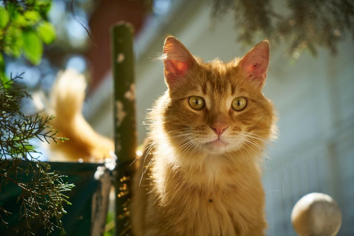 Puedes recuperar la confianza de tu gato con paciencia