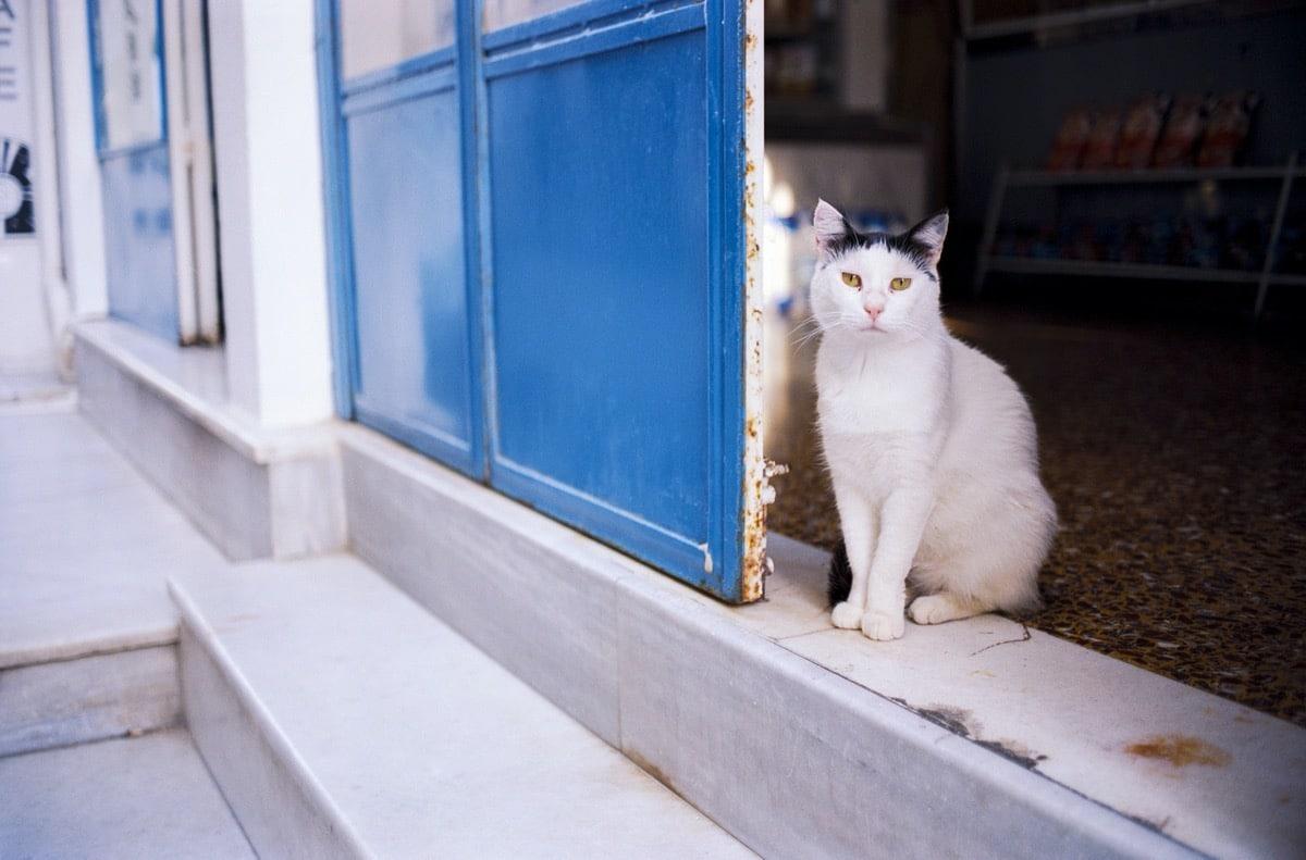Gato en la entrada de su casa