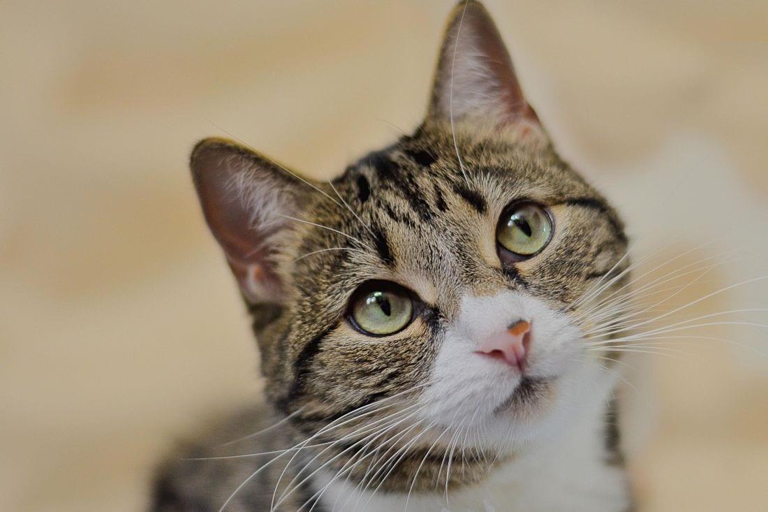 En caso de maltrato animal, déjate asesorar por Protectoras de animales y asociaciones sin ánimo de lucro