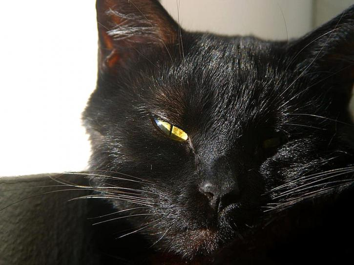 Adorable gato negro