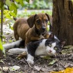 Perro salchicha con un gato en el jardín