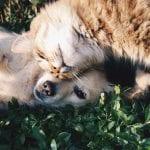 Dos amigos: un perro y un gato