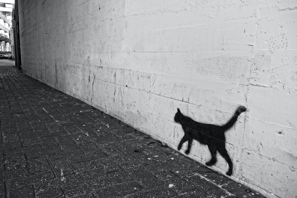 Las marcas de los gatos tienen varias funciones