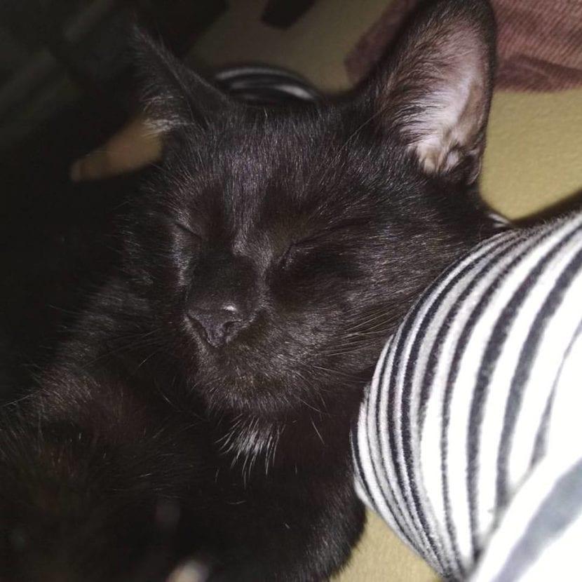 Mi gato Bicho