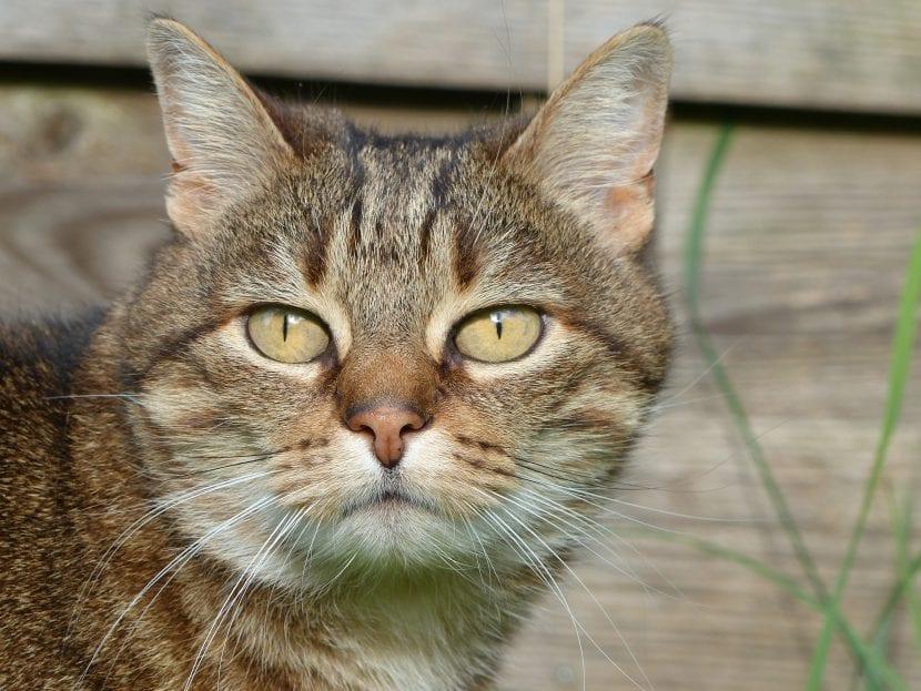 Descubre si tu gato es macho o hembra