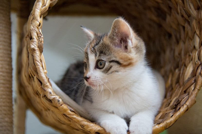 Habla con tu ex pareja para llegar a un acuerdo sobre con quién se quedará el gato