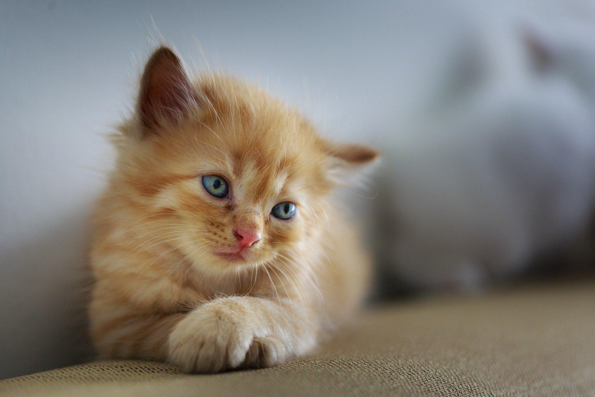 Gatito joven no puede orinar