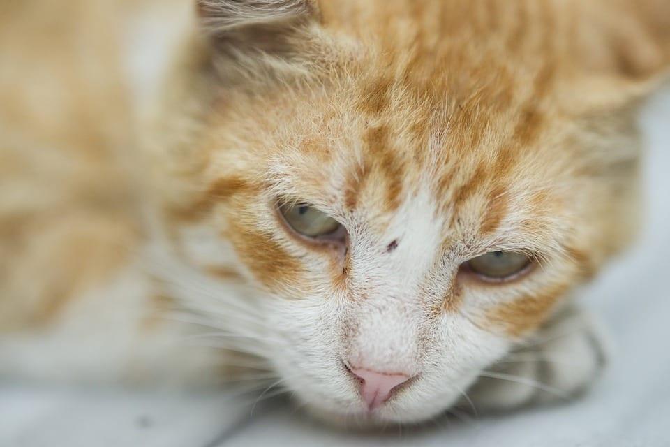 Ayuda a tu gato a recuperarse