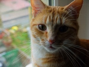 Si sabes que un gato está siendo maltratado, avisa a la Policía