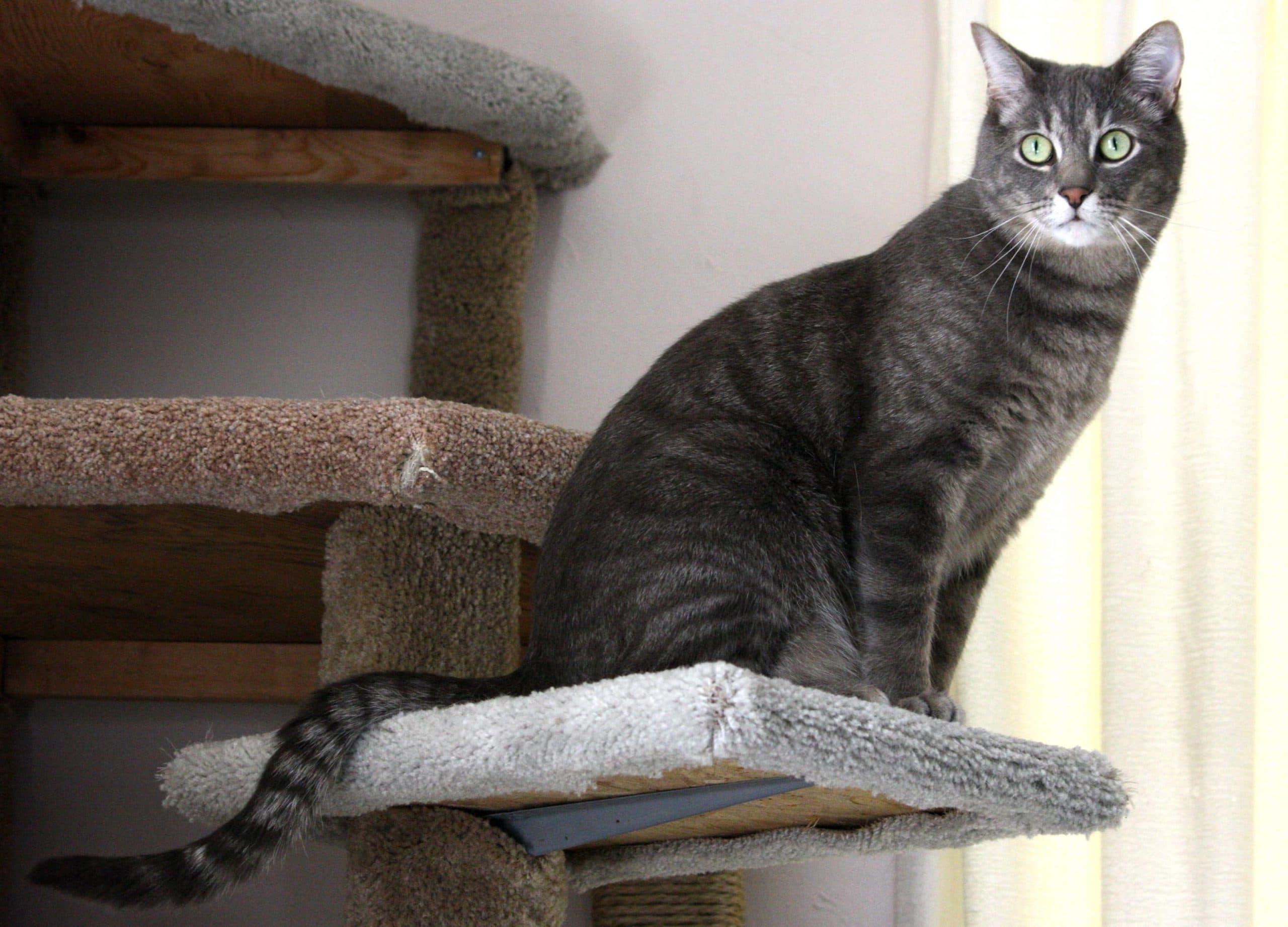 El gato atigrado puede vivir unos 20 años