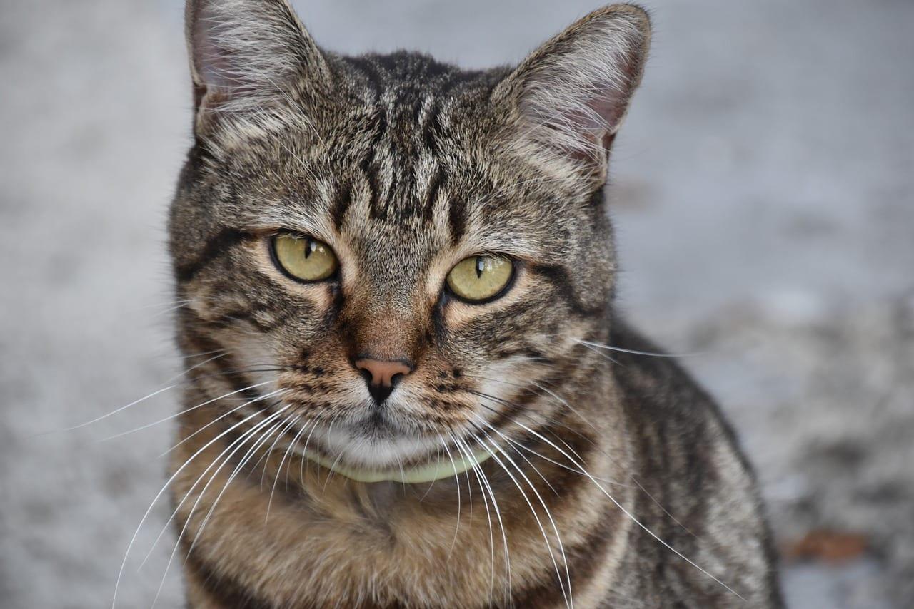 Presta atención a tu gato y dale compañía
