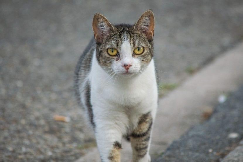 Gato bicolor viviendo en la calle