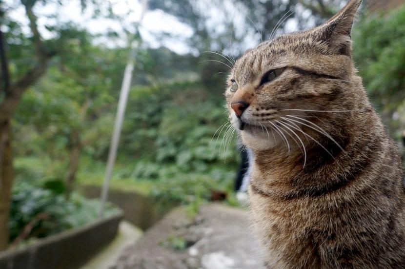 El gato no es un animal preparado para vivir en el interior del hogar