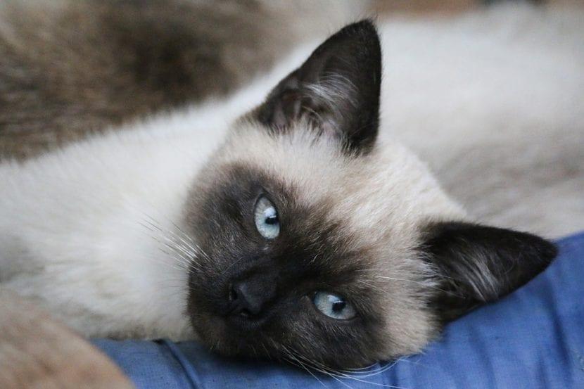 Lleva a tu gato al veterinario si sospechas que está enfermo