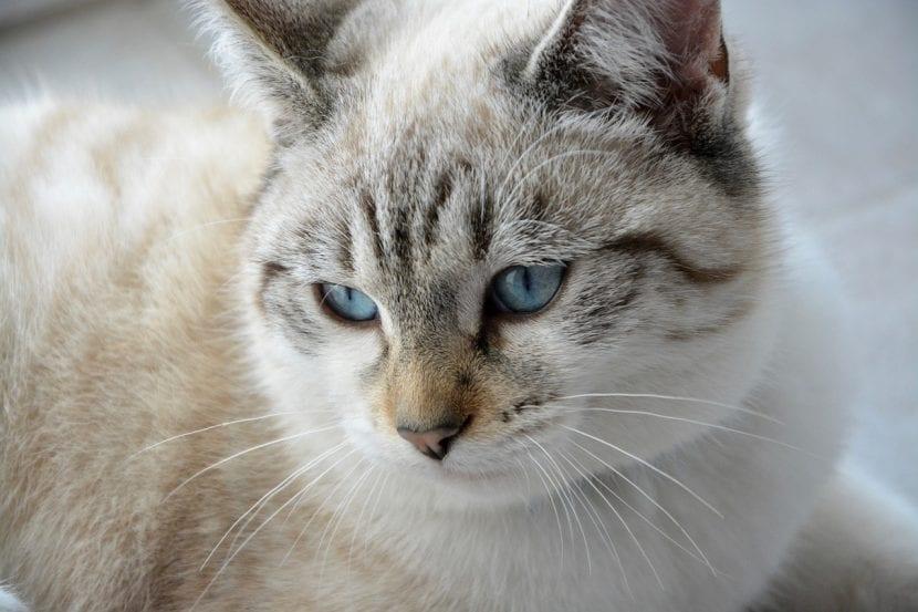 Cuida a tu gato adolescente para que sea un animal feliz