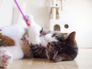 Los gatos cazan cosas desde que son jóvenes